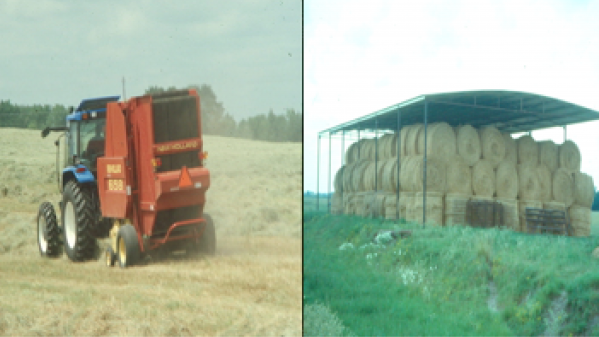 Minimizing Hay Losses is Important