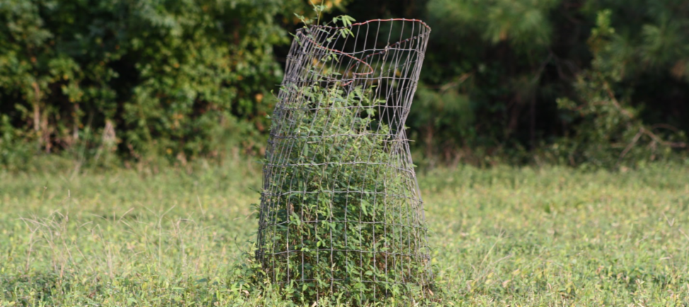 FORAGING AHEAD WITH DR. DON BALL: EXCLUSION CAGES