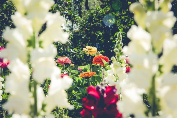 Revamp Your Garden Before Spring