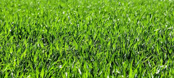 Get Your Yard In Shape For Spring
