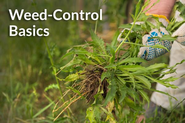 Knowing weed-control basics will keep you out of the weeds