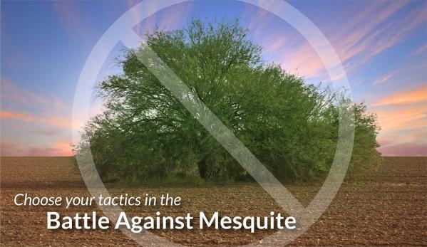 Mesquite management: cut-stump vs. basal-bark treatment