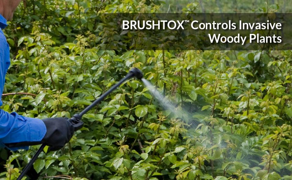 Control woody plants and broadleaf weeds with BRUSHTOX™