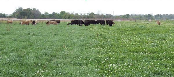 THE CASE FOR FORAGE LEGUMES