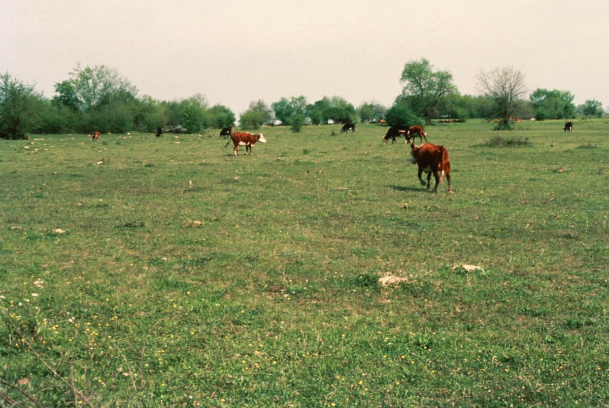 Why Overgrazing is Bad