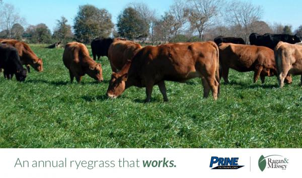 With Prine Ryegrass, it's prime time for winter forage
