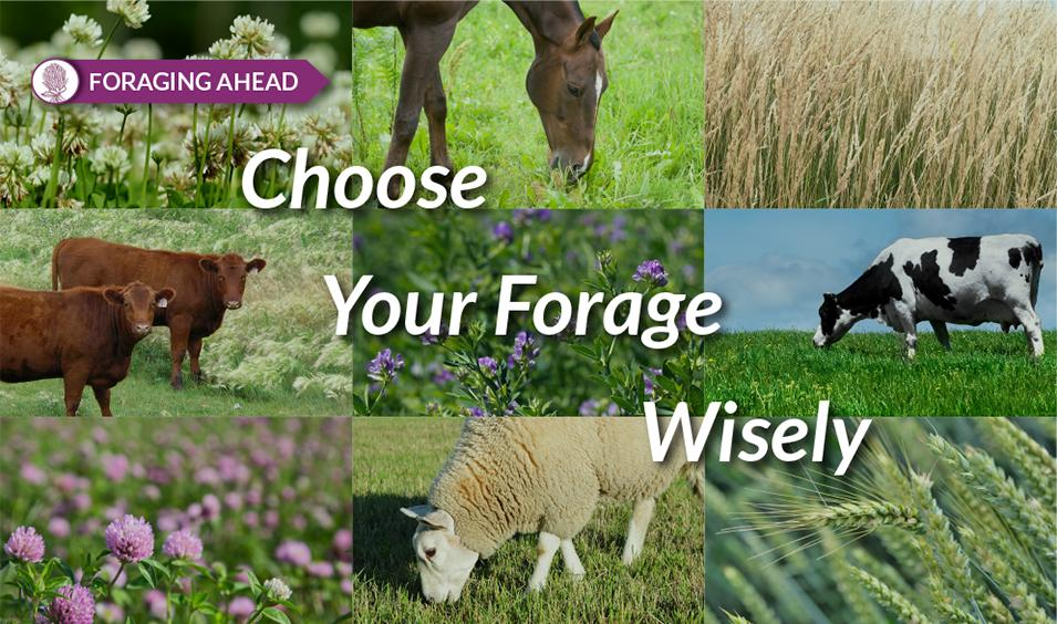 Foraging Ahead with Dr. Don Ball: Making informed forage selection decisions