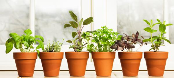 Bring Your Garden Indoors This Winter