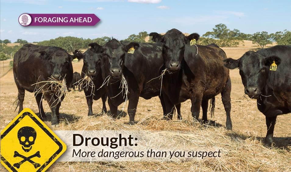 Foraging Ahead with Dr. Don Ball: Dry pasture can lead to poisoned livestock
