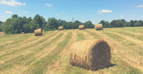 FORAGING AHEAD WITH DR. DON BALL: AVOIDING HAY FIRES