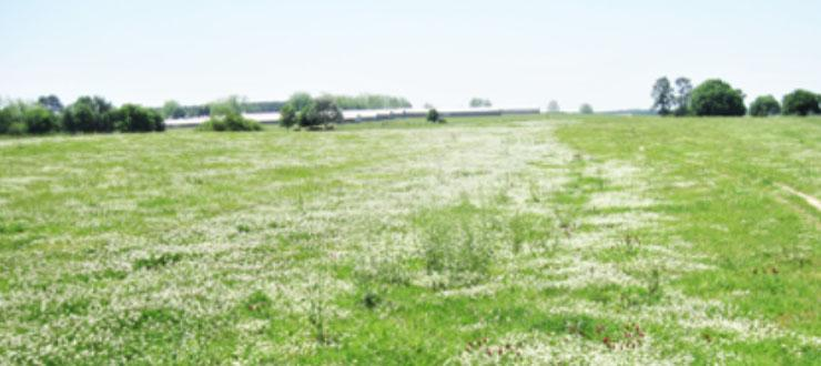 MANAGING WEEDS IN CLOVERS