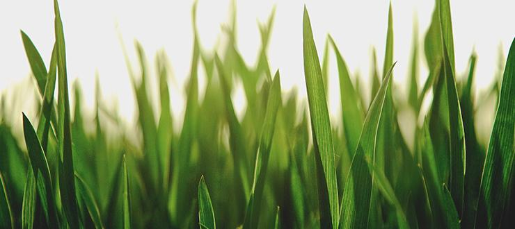 3 Products Your Lawn Should Never Be Without