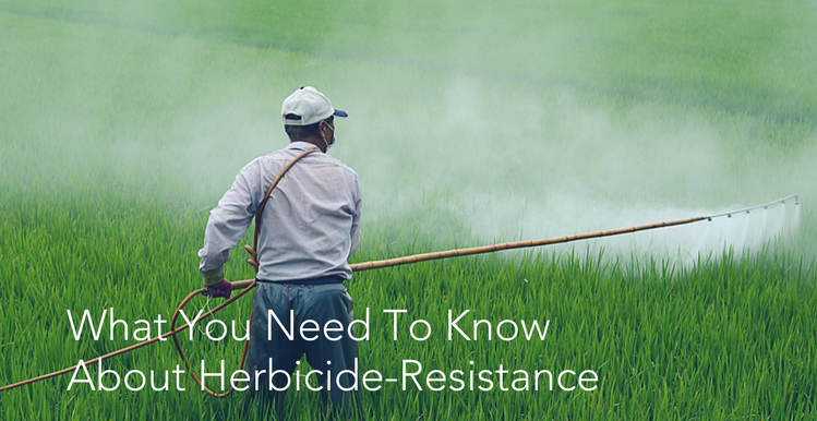 What You Need To Know About Herbicide-Resistance