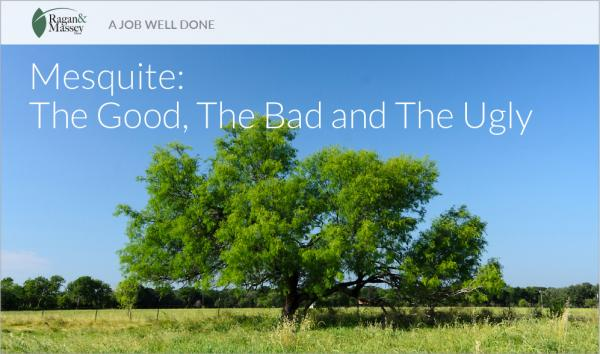 """""""A Job Well Done"""" by Ragan & Massey: Mesquite Control"""