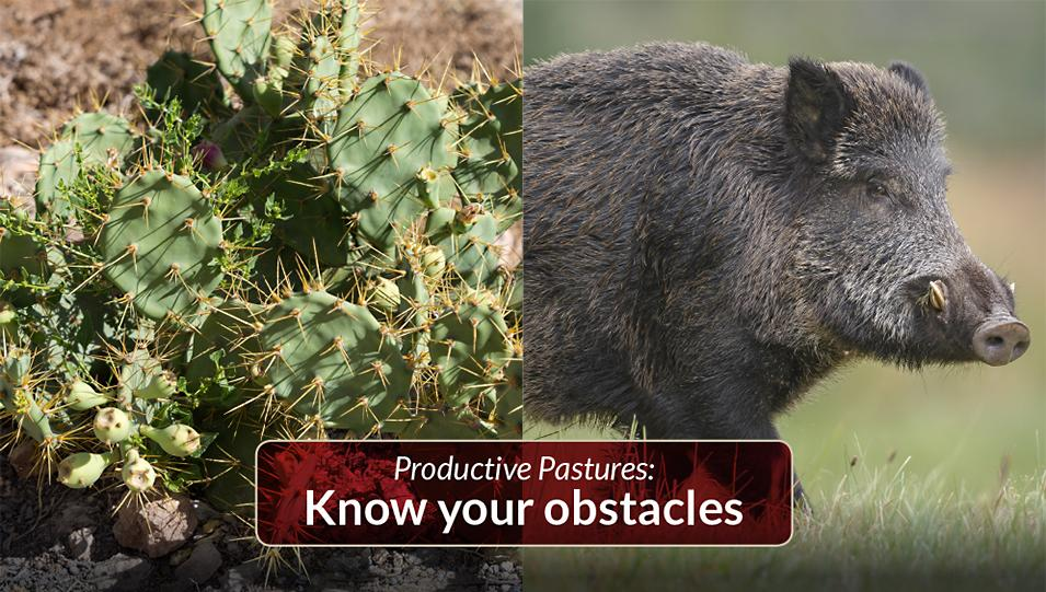 Know your obstacles when establishing a pasture