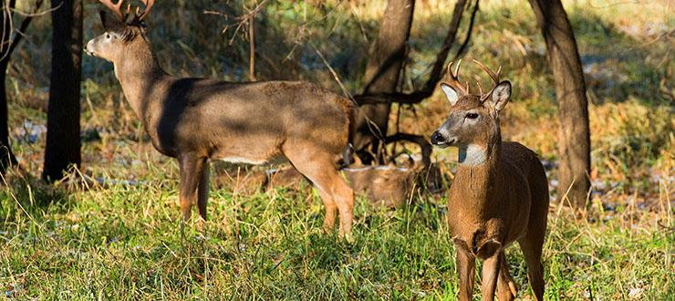 Why You Should Start Your Food Plot Now