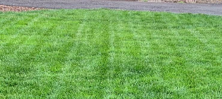 4 Things We Love About Compare-N-Save Weed Killer for Lawns