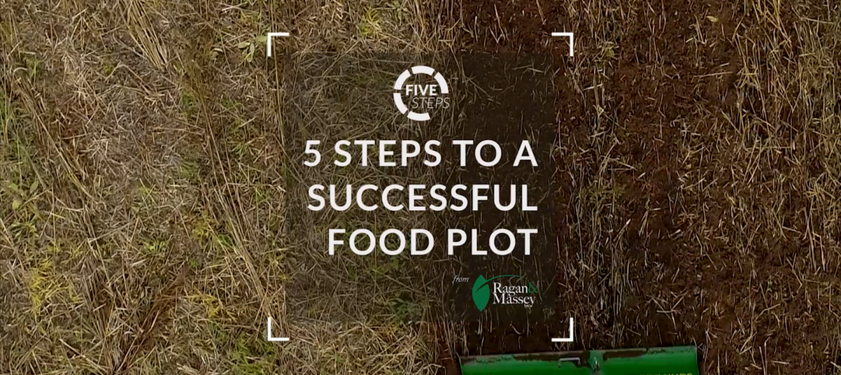 5 Steps to a Successful Food Plot