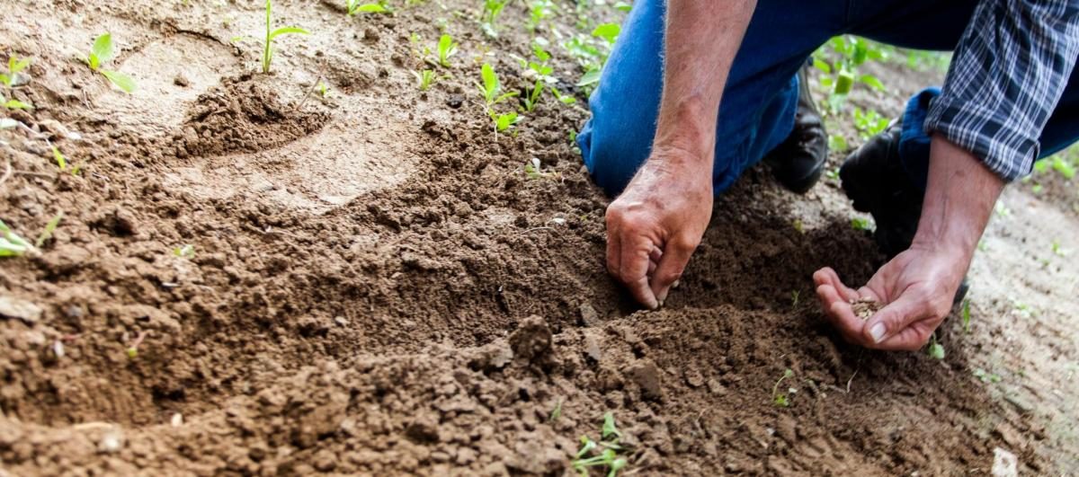 How To Fertilize Your Food Plots When You Don't Have a Soil Sample