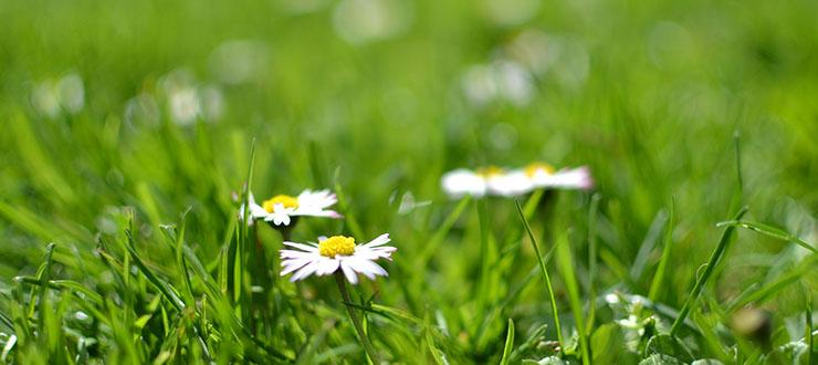 8 Best Practices For Lawn And Garden Prep