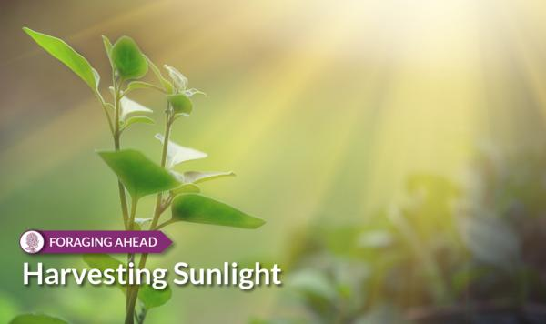 Foraging Ahead with Dr. Don Ball: Harvesting Sunlight