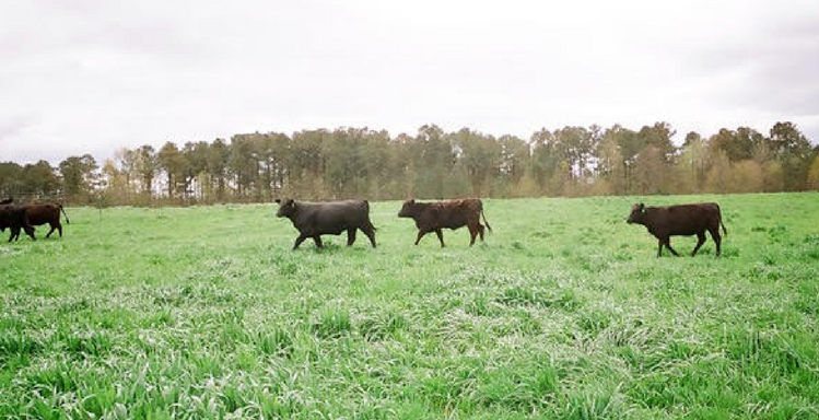 Foraging Ahead With Dr. Don Ball: Fertilizing Forages With Broiler Litter