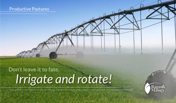 Irrigation and rotation are keys to favorable forage