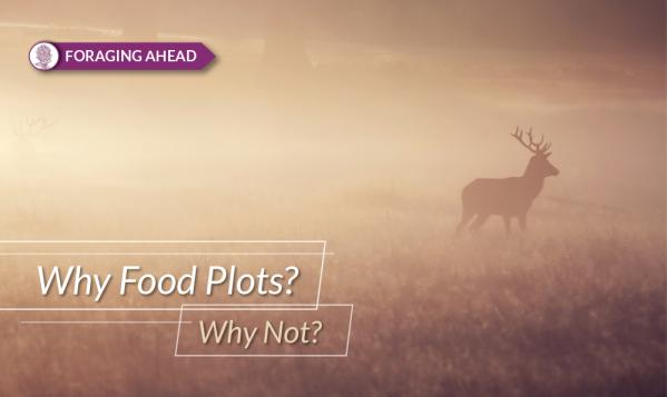 Foraging Ahead with Dr. Don Ball: Why plant food plots?