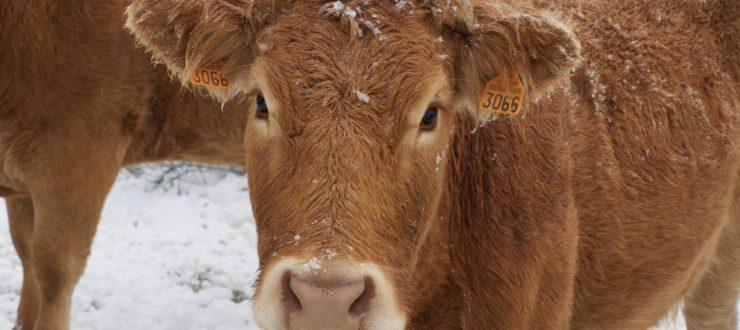 4 Ways To Keep Your Herd Alive This Winter