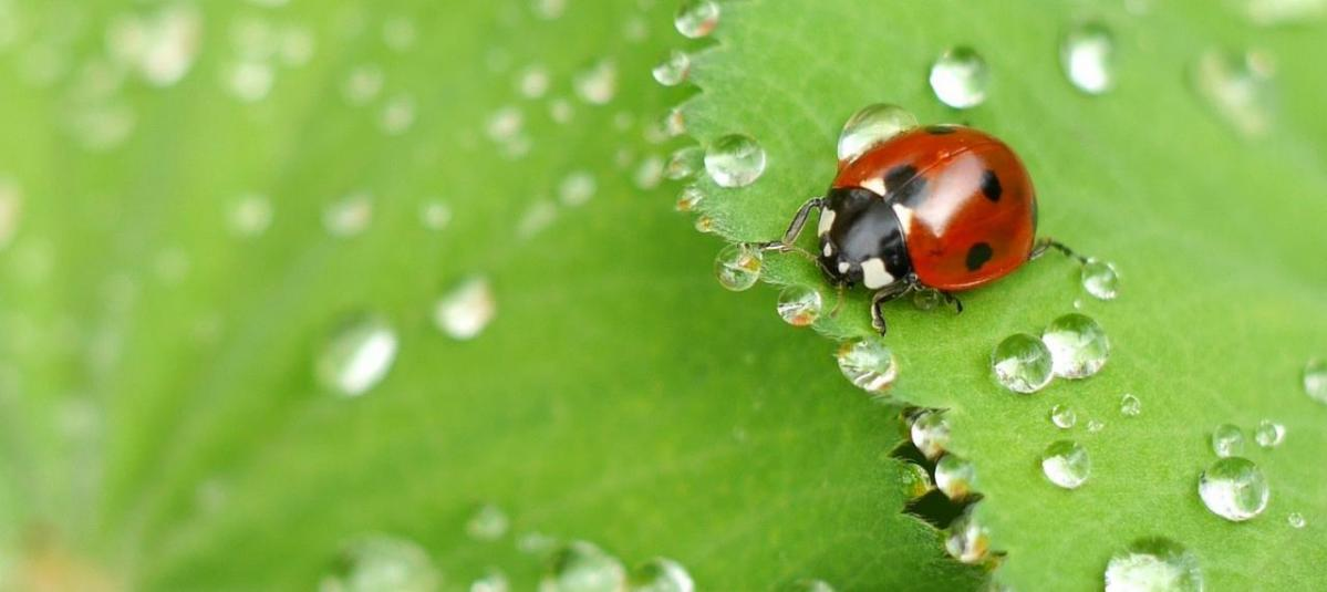 Conquer Destructive Insects And Take Back Your Garden