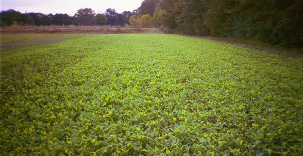 Food Plots Made Easy: 4 Ways To Establish Seeds, Encourage Growth, And Attract Game