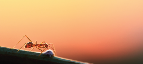 Don't Let Fire Ants Ruin Your Summer Fun
