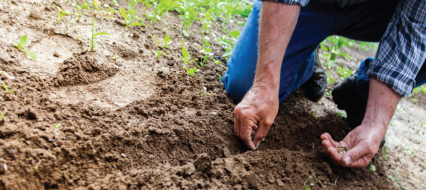 Tips for Replanting After Spraying a Herbicide
