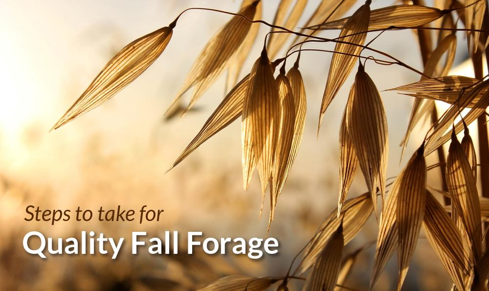 Forage oats are key to fall pasture health