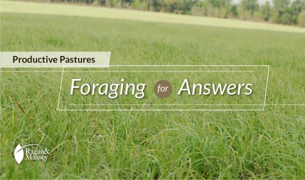 Choices to make for healthy, vigorous forage