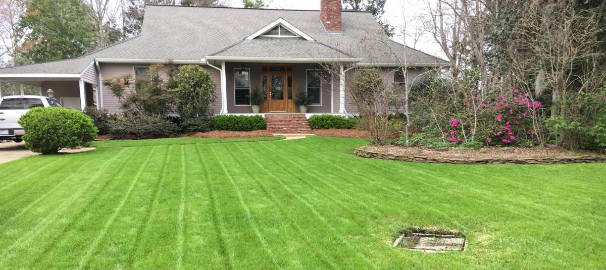 Five Steps to a Perfect Lawn with Mayberry Seed