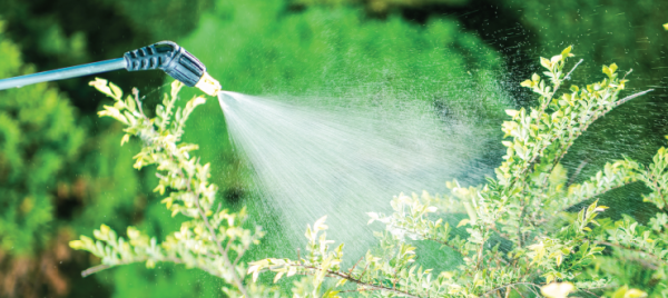 Using Ragan & Massey Insecticides