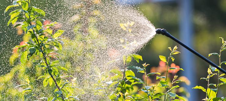 Give Summer's Biggest Pests the Brush Off