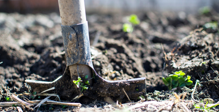 5 Basic Gardening Tools Everyone Should Have