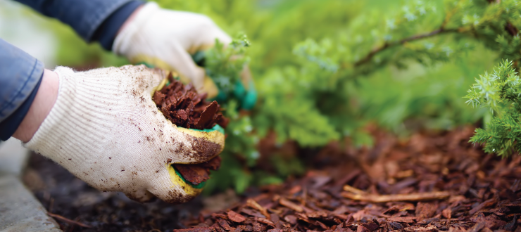 Mulch and Herbicides: A Match Made in Heaven