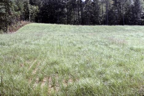 Using Bahiagrass in Crop Rotations