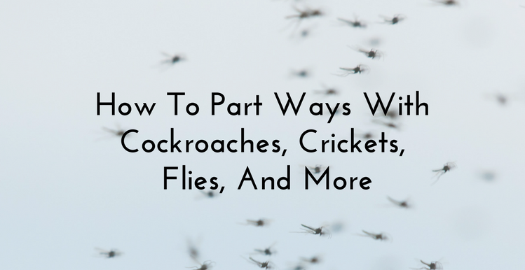 How To Part Ways With Cockroaches, Crickets, Flies, And More