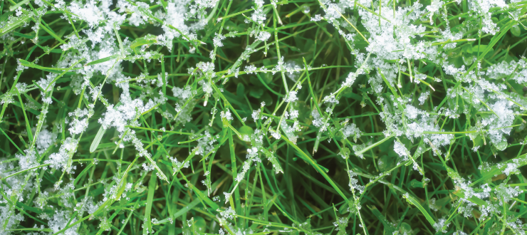 Protecting Your Lawn During Winter