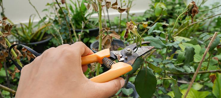 Pruning Your Garden in Late-Winter