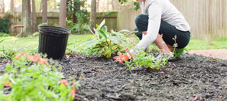 Five Steps to Easy Garden Prep