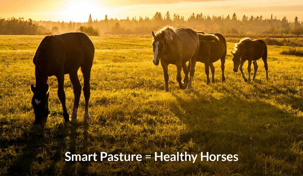 Smart pasture management makes healthy, happy horses