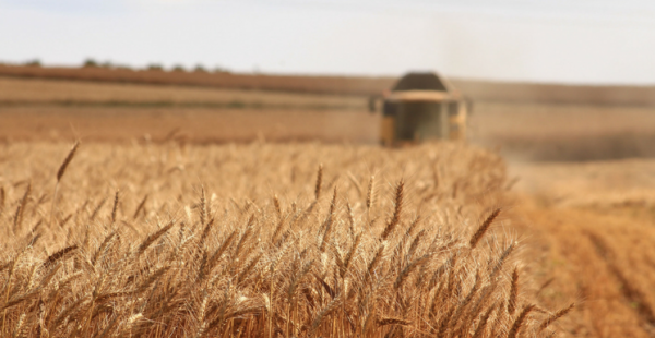 7 Tips For Preparing For A Healthy Harvest