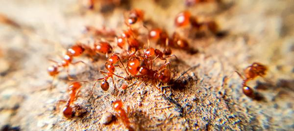Take the Sting Out of Fire Ants this Summer