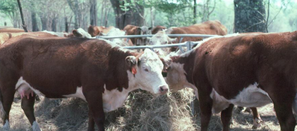 Foraging Ahead With Dr. Don Ball: Hay Feeding Deserves Attention