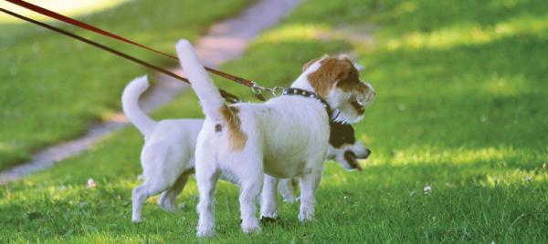 Using Ragan & Massey Products Around Pets